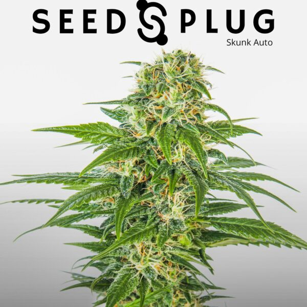Original Auto Skunk | Fast Buds Seeds