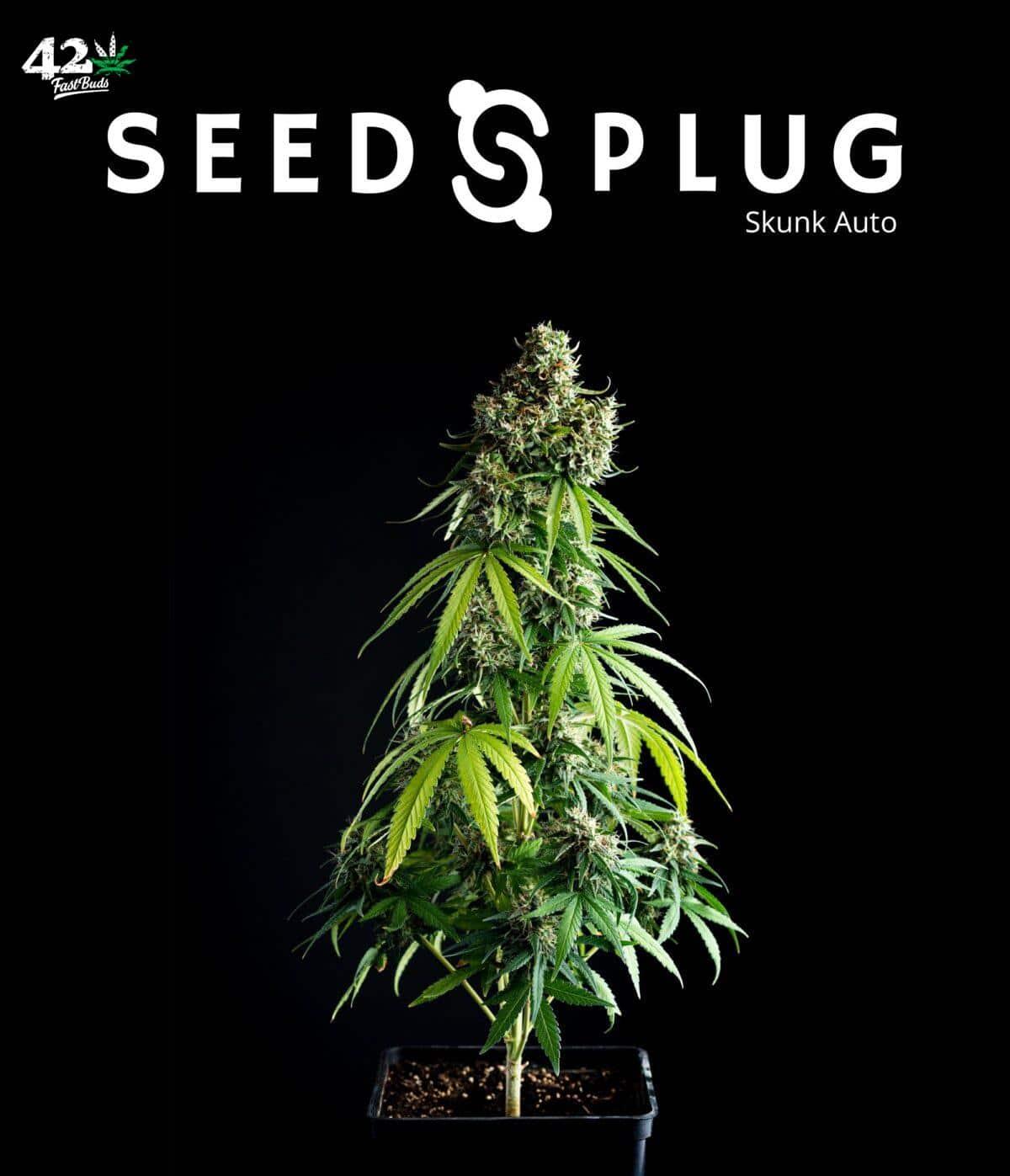 Original Auto Skunk | Fast Buds Seeds