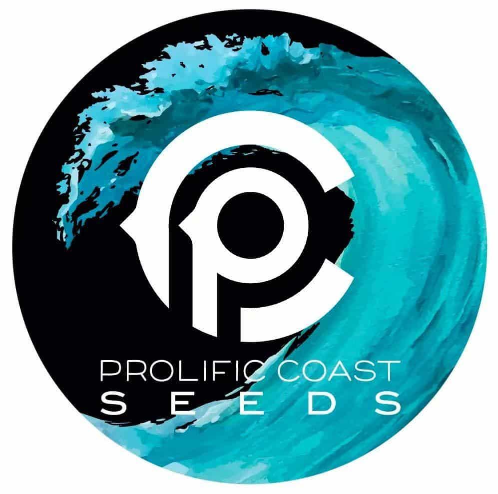 Wet Paint | Prolific Seeds Coast | PCS_WET_PNT